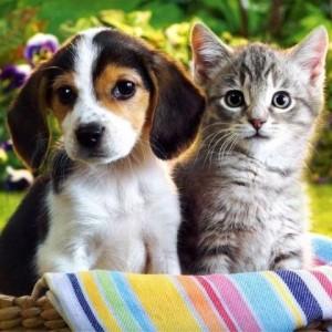 Mnóstwo radości pod każdym dachem – domy tymczasowe dla zwierząt