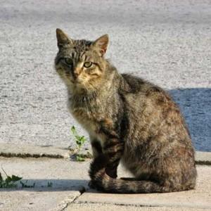List otwarty w sprawie dokarmiania wolno żyjących kotów w Pruszkowie