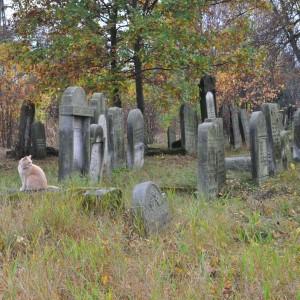 Dni otwarte na Cmentarzu Żydowskim w Pruszkowie przy ulicy Lipowej